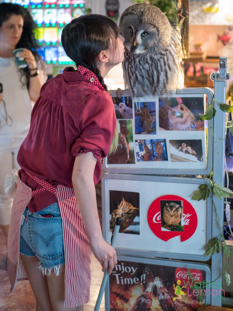 Owl Cafe.jpg